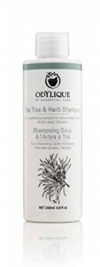 Odylique Shampoing Doux à L'Arbre à Thé Bio 200ml de la marque Odylique by Essential Care image 0 produit