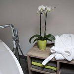 ZOLLNER Peignoir avec col châle, Beaucoup de Tailles, Blanc, Pur Coton,020 de la marque ZOLLNER image 3 produit